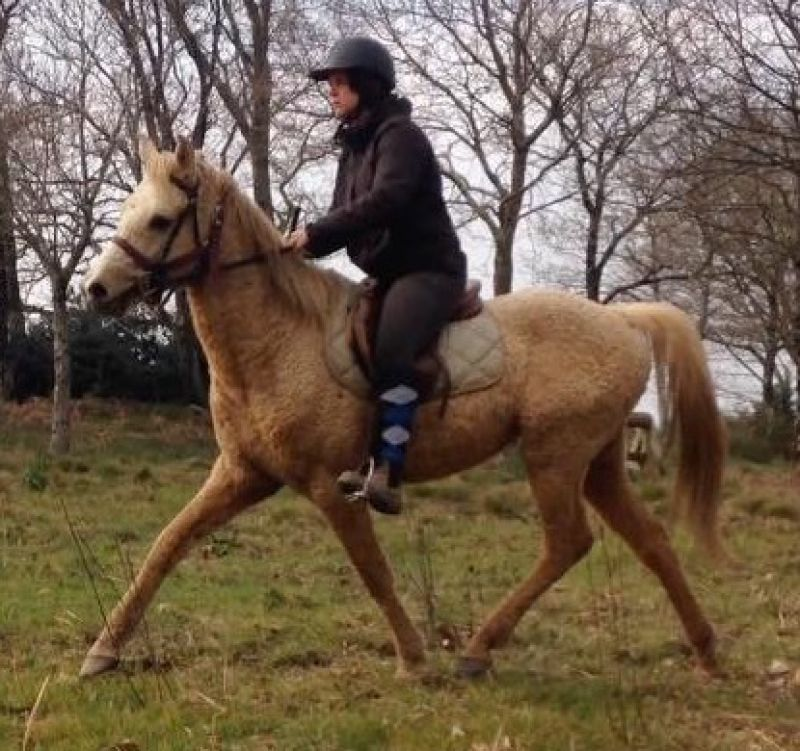 Etalon curly gaited Eyota Wakan GG